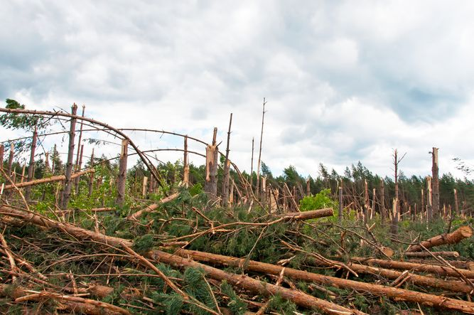 Sturmschäden: Bundeslandwirtschaftsminister Christian Schmidt sagt Waldbauern Hilfe zu