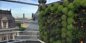 Die Landwirtschaft zieht in Paris auf die Dächer - ECOVIS Agrar - Steuerberater, Rechtsanwälte, Unternehmensberater