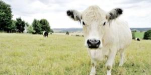 Aufzeichnungspflichten bei Tierhaltungskooperationen