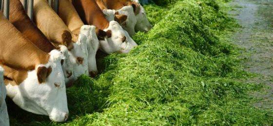 Grundsteuerreform: Stehen Tierhaltungskooperationen vor dem Aus?