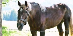 Verlustausgleich bei Pferdehaltung