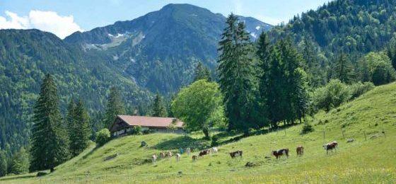 Ist die Änderung der Jagdzeiten in bestimmten oberbayerischen Schutzwaldsanierungsgebieten zulässig?