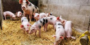 Geruchsbelästigung Landwirtschaft