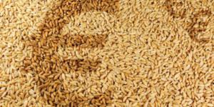 Welcher Steuersatz gilt für das Mahlen von Futtermitteln? - ECOVIS Agrar - Steuerberater, Wirtschaftsprüfer, Rechtsanwälte