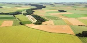 Welche landwirtschaftlichen Flächen gehören zum Betriebsvermögen? - ECOVIS Agrar - Steuerberater, Rechtsanwälte, Unternehmensberater