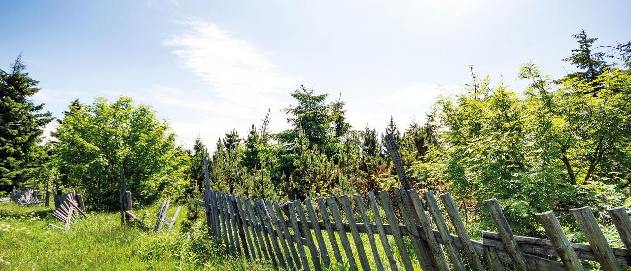 Grenzbepflanzung: Welche Regeln gelten für Grundstücksgrenzen?