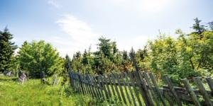 Grenzbepflanzung Regeln