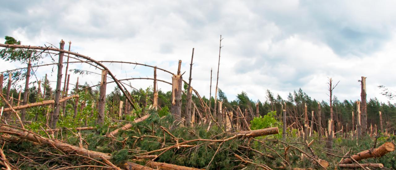 Unfall im Wald: Wer haftet?