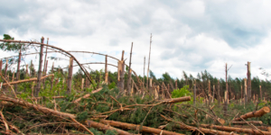 Unfall im Wald: Wer haftet