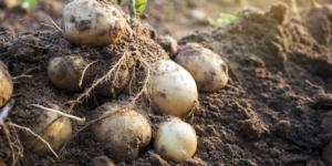 Ökologischer Landbau: Chancen und Risiken – ein Vergleich - ECOVIS Agrar - Steuerberater, Rechtsanwälte, Unternehmensberater