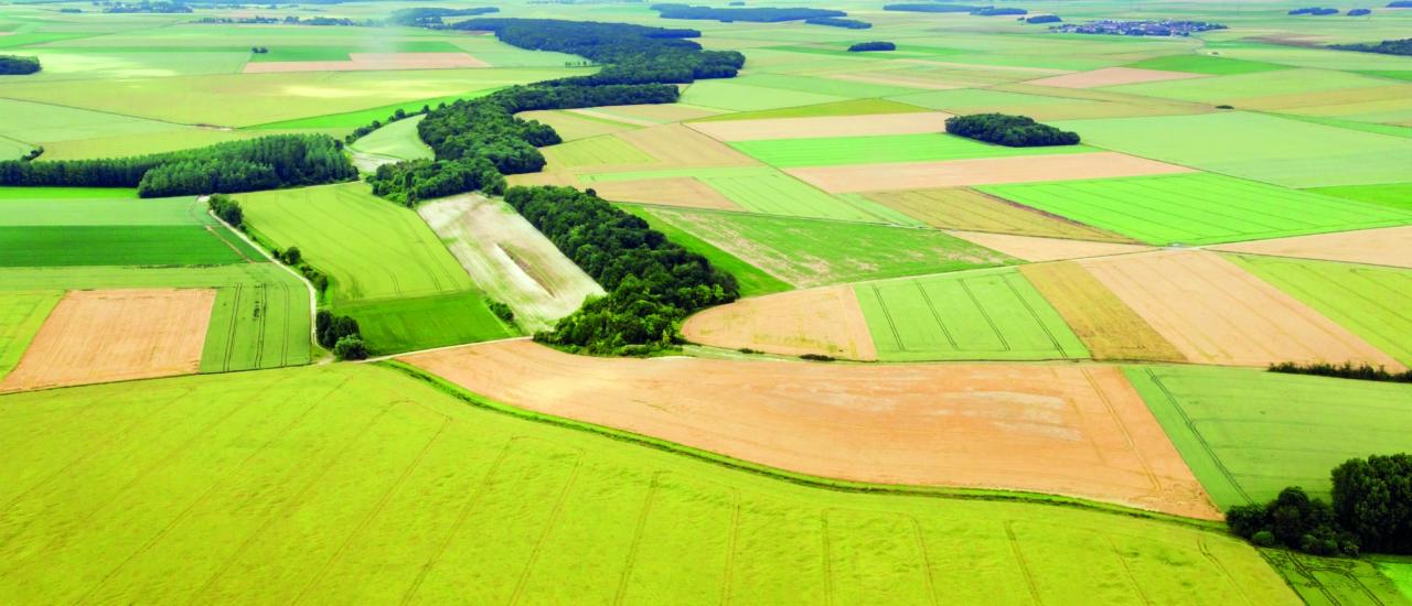 Einkünfte aus Unterverpachtung von Flächen: Sind das Einkünfte aus Land- und Forstwirtschaft?