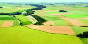 Einkünfte aus Unterverpachtung von Flächen: Sind das Einkünfte aus Land- und Forstwirtschaft? - ECOVIS Agrar - Steuerberater, Rechtsanwälte, Unternehmensberater