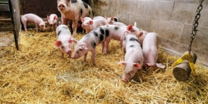 Wie viele Tiere dürfen Landwirte halten? Ecovis im Bayerischen Rundfunk - ECOVIS Agrar - Steuerberater, Rechtsanwälte, Unternehmensberater