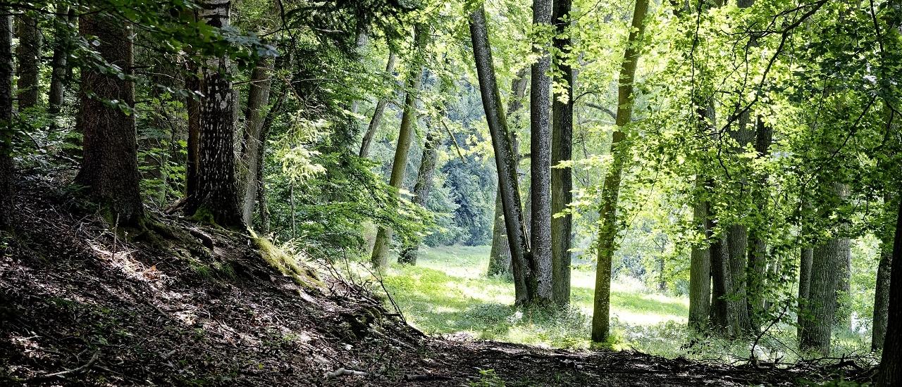 Waldeigentümer und Schadenersatz: Wer haftet im Fall einer verletzten Pilzesammlerin?