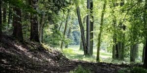 Waldeigentümer und Schadenersatz: Wer haftet im Fall einer verletzten Pilzesammlerin? - ECOVIS Agrar - Steuerberater, Rechtsanwälte, Unternehmensberater