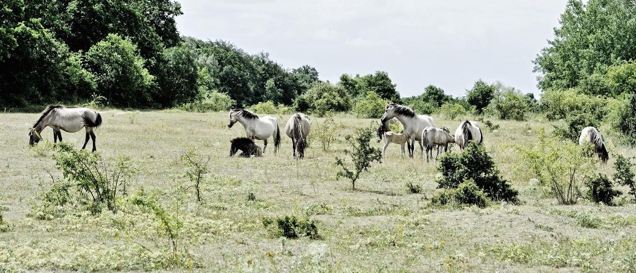 Reitunfall: Haftet der Pferdehalter dafür?