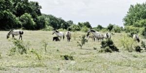 Reitunfall: Haftet der Pferdehalter dafür? - ECOVIS Agrar - Steuerberater, Rechtsanwälte, Unternehmensberater