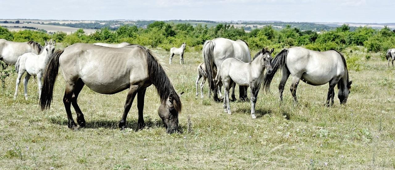 Pferdestall am Nachbargrundstück: Ist das erlaubt?