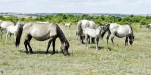 Pferdestall am Nachbargrundstück: Ist das erlaubt? - ECOVIS Agrar - Steuerberater, Rechtsanwälte, Unternehmensberater