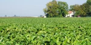 Markenrecht: Warum Landwirte ihre Ideen schützen lassen sollten - ECOVIS Agrar - Steuerberater, Rechtsanwälte, Unternehmensberater