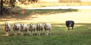 Solarparkflächen und Schafweide: Gibt es dafür Direktzahlungen? - ECOVIS Agrar - Steuerberater, Rechtsanwälte, Unternehmensberater