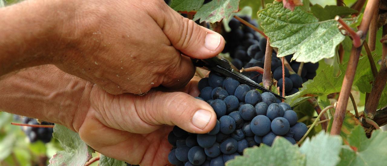 Weinbau